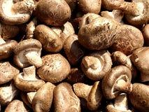 Fresh, raw mushrooms. Photo of a bunch of fresh, raw mushroom Stock Photography