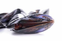 Fresh raw mussel. On white Stock Photos