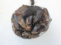 Fresh raw mussel  in the bag royalty free stock images