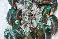 Fresh raw Mussel on ice background the seafood supermarket. Fresh raw Mussel on ice background in the seafood supermarket royalty free stock photos