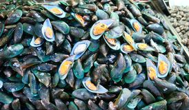 Fresh raw mussels. Pile of fresh mussels in the market Royalty Free Stock Photos
