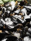 Fresh raw mussels on rusty tray. Seafood concept Royalty Free Stock Image
