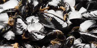 Fresh raw mussels on rusty tray. Seafood concept Royalty Free Stock Photography