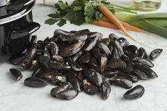 Fresh raw mussels. Fresh uncooked common mussels in the shell Royalty Free Stock Photo