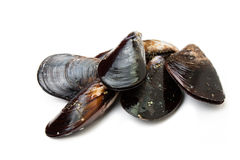 Fresh and raw mussels. On white Royalty Free Stock Photography