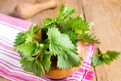 Fresh raw nettle. Leaves with mortar and pestle over rustic wooden table Royalty Free Stock Photos