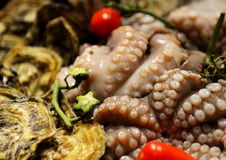 Fresh raw octopus Royalty Free Stock Photography