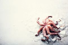 Fresh raw octopus on ice, grey concrete background. Top view, copy space. Square crop. Fresh raw octopus on ice, grey concrete background. Top view, copy space Royalty Free Stock Photos