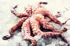 Fresh raw octopus on ice, grey concrete background. Top view, copy space. Square crop. Fresh raw octopus on ice, grey concrete background. Top view, copy space Stock Image