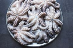 Fresh raw octopus on a large platter. Concept - healthy food, lo royalty free stock photography