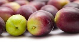 Fresh raw olives Stock Photos