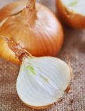 Fresh raw onions Stock Photography