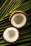 Fresh raw opened coconuts. Fresh raw  opened  coconuts . on a rustic wood background Royalty Free Stock Images