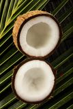 Fresh raw opened coconuts. Fresh raw  opened  coconuts . on a rustic wood background Stock Photography