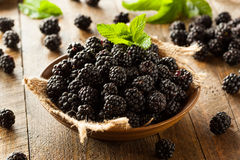 Fresh Raw Organic Blackberries. In a Bowl Stock Photo