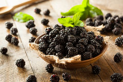 Fresh Raw Organic Blackberries. In a Bowl Stock Images