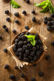 Fresh Raw Organic Blackberries. In a Bowl Stock Photos