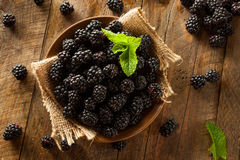 Fresh Raw Organic Blackberries. In a Bowl Royalty Free Stock Images