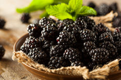Fresh Raw Organic Blackberries. In a Bowl Royalty Free Stock Photo