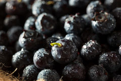 Fresh Raw Organic Blueberries. In a Bowl Royalty Free Stock Photos