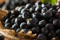 Fresh Raw Organic Blueberries. In a Bowl Royalty Free Stock Images