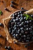 Fresh Raw Organic Blueberries. In a Bowl Royalty Free Stock Image
