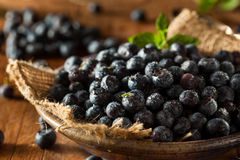 Fresh Raw Organic Blueberries. In a Bowl Royalty Free Stock Photography