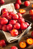 Fresh Raw Organic Cherry Plums. Ready to Eat Royalty Free Stock Photo