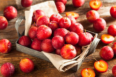 Fresh Raw Organic Cherry Plums. Ready to Eat Royalty Free Stock Photography