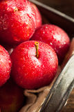 Fresh Raw Organic Cherry Plums. Ready to Eat Royalty Free Stock Images