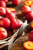 Fresh Raw Organic Cherry Plums. Ready to Eat Royalty Free Stock Image