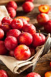 Fresh Raw Organic Cherry Plums. Ready to Eat Stock Photography