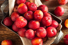 Fresh Raw Organic Cherry Plums. Ready to Eat Stock Images