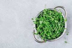 Fresh raw organic green pea shoots in colander, top view royalty free stock photography