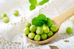 Fresh raw organic green peas in wooden spoon on white background Royalty Free Stock Photos