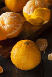 Fresh Raw Organic Mandarin Oranges Stock Images