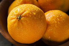 Fresh Raw Organic Mandarin Oranges Stock Photo