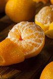 Fresh Raw Organic Mandarin Oranges Stock Photos
