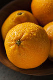 Fresh Raw Organic Mandarin Oranges Stock Image