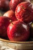 Fresh Raw Organic Passion Fruit. Ready to Eat Stock Image
