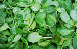 Fresh raw organic spinach leaves. In France Royalty Free Stock Image