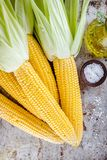 Fresh raw organic sweet corn cobs. On rustic background Royalty Free Stock Photography