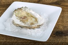 Fresh raw oyster. On the ice background Royalty Free Stock Images