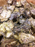 Fresh raw Oyster. Sell in the local market Royalty Free Stock Photos