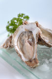 Fresh raw oyster on glass plate. Close up fresh raw oyster on glass plate Stock Photos