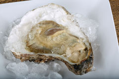 Fresh raw oyster. On the ice background Stock Photography