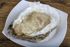 Fresh raw oyster. On the ice background Royalty Free Stock Image