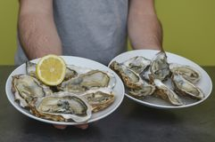 Fresh raw oyster in man hand. Fresh oysters, seaweed and lemon Stock Image
