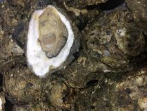 Fresh raw Oyster. Sell in the local market Stock Photo