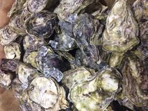 Fresh raw Oyster. Sell in the local market Royalty Free Stock Image